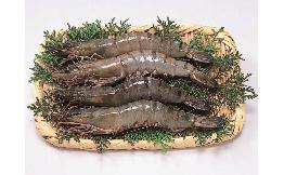 有頭殻付ブラックタイガー(約32.5g) 7尾