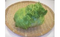 レタス 1玉 【生鮮野菜】