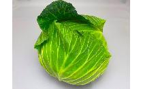 キャベツ 1玉 【生鮮野菜】