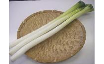 長ネギ 3本 【生鮮野菜】