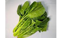 【生鮮野菜】 ほうれん草 200g