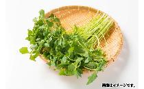 【生鮮野菜】 三つ葉 1パック