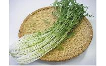 水菜 200g 【生鮮野菜】