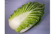 白菜 1個