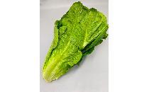 【生鮮野菜】 ロメインレタス 1玉