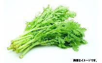 春菊 150g 【生鮮野菜】