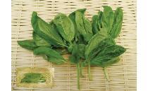 【生鮮野菜】 バジル 1パック