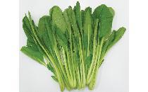 小松菜 250g 【生鮮野菜】