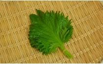 【生鮮野菜】 大葉 1パック