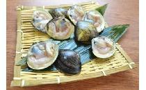 片貝はまぐり(生冷凍) 20個