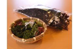 フタバ 海藻ミックス 100g