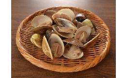 ボイル 殻付きはまぐり 500g(11-15粒)