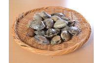 殻付き あさり(生冷凍)(60/80) 1kg