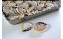 片貝はまぐり(ボイル) 500g