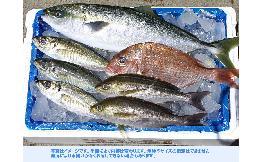 南房総地魚セット 1セット