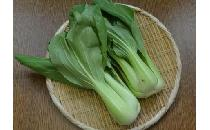 チンゲン菜 2個