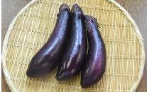 【生鮮野菜】 長なす 3本