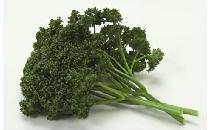 【生鮮野菜】 パセリ 50g