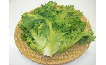 【ケース】グリーンカール 15個 【生鮮野菜】