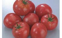 【ケース】トマト M 24個 【生鮮野菜】