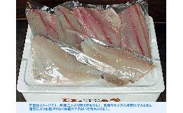 房総地魚鮮魚フィレ4種(真空)約1.5㎏ 1セット